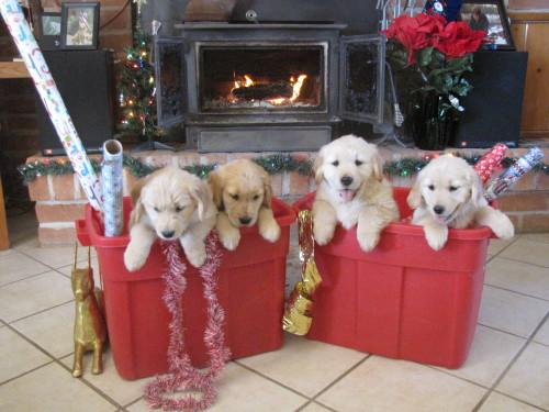 Christmas pics 252