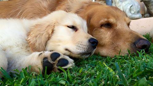 chrissy's pups