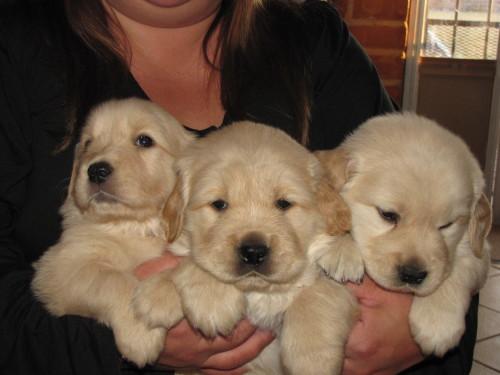 pups 11-15-09 005