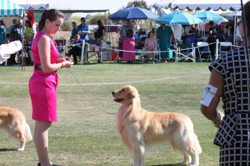 Shammy and April 13 dog show 184