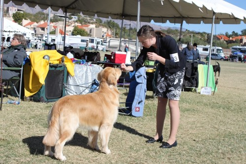 Tucson dog show Nov 9th 2012 059